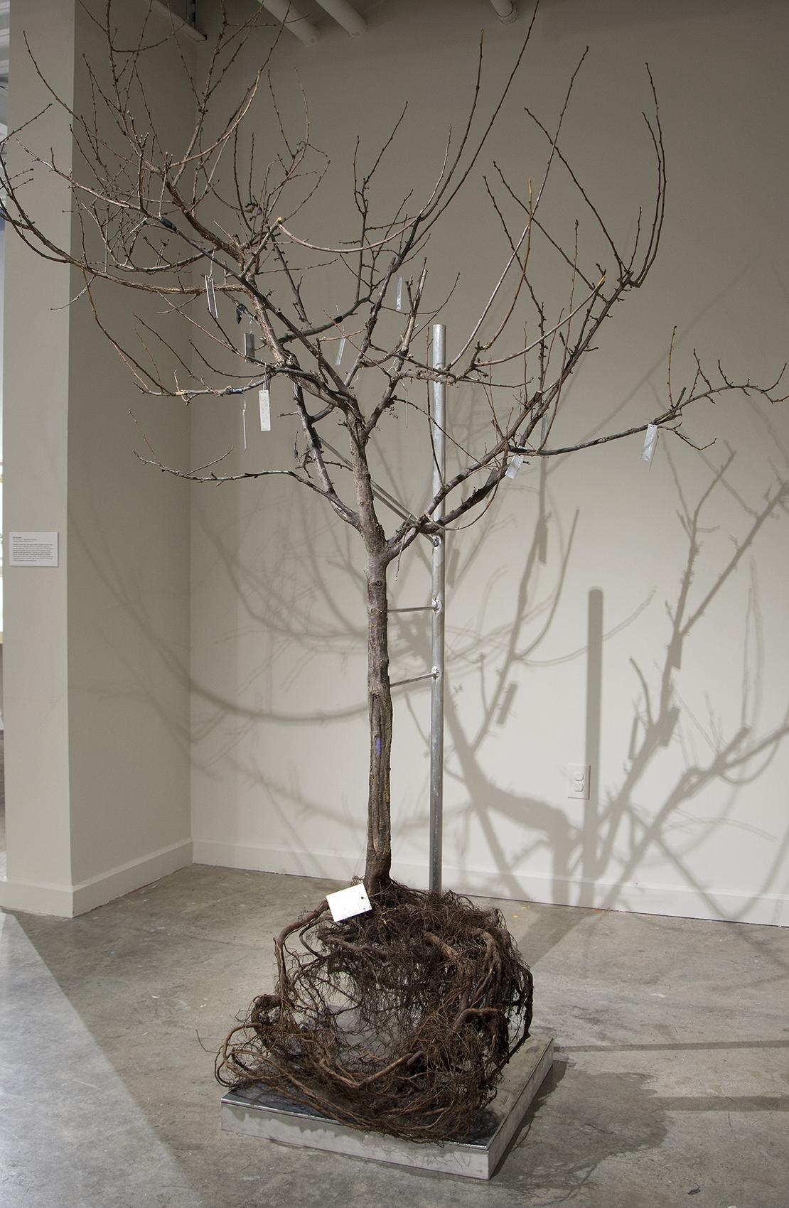Bare Root-4R.jpg