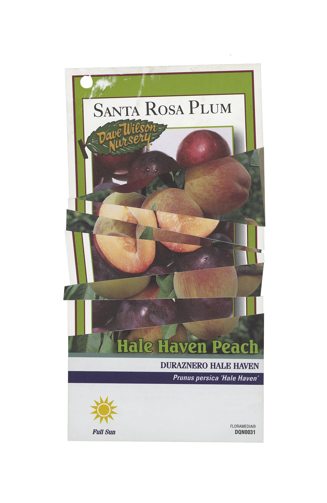Santa Rosa-Hale Haven (22x34).jpg