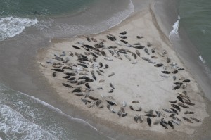 Seal Research