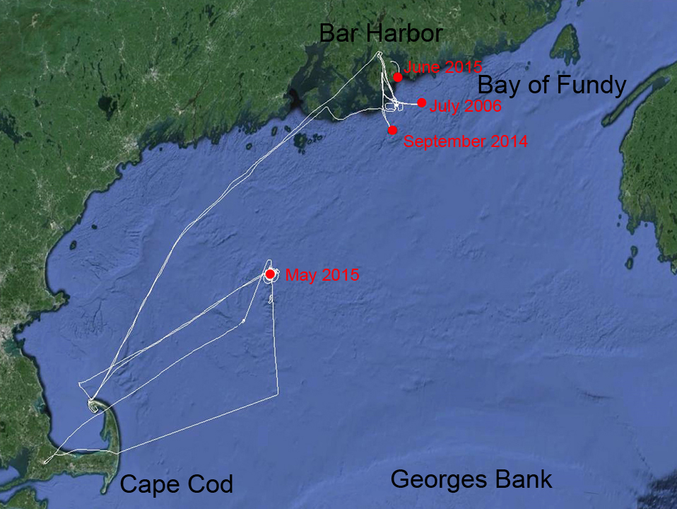 Map of entanglements and stranding of Spinnaker within the Gulf of Maine. Tracks of responses (by boat and plane) in white.