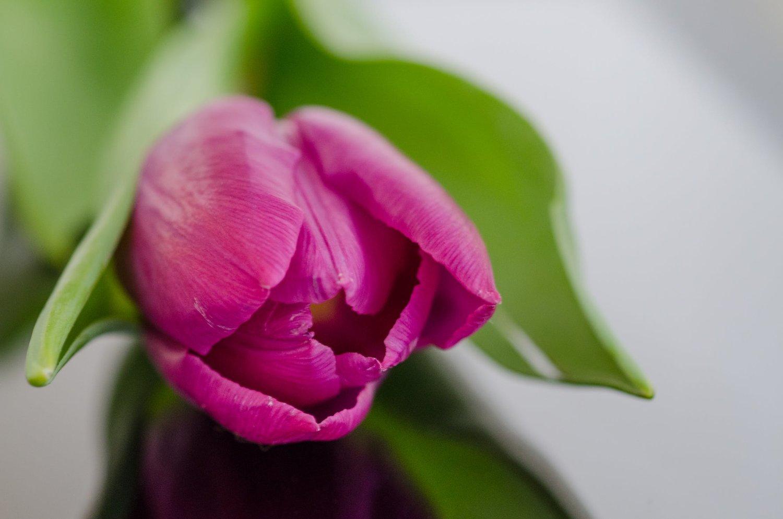 nature-purple-garden-flower.jpg