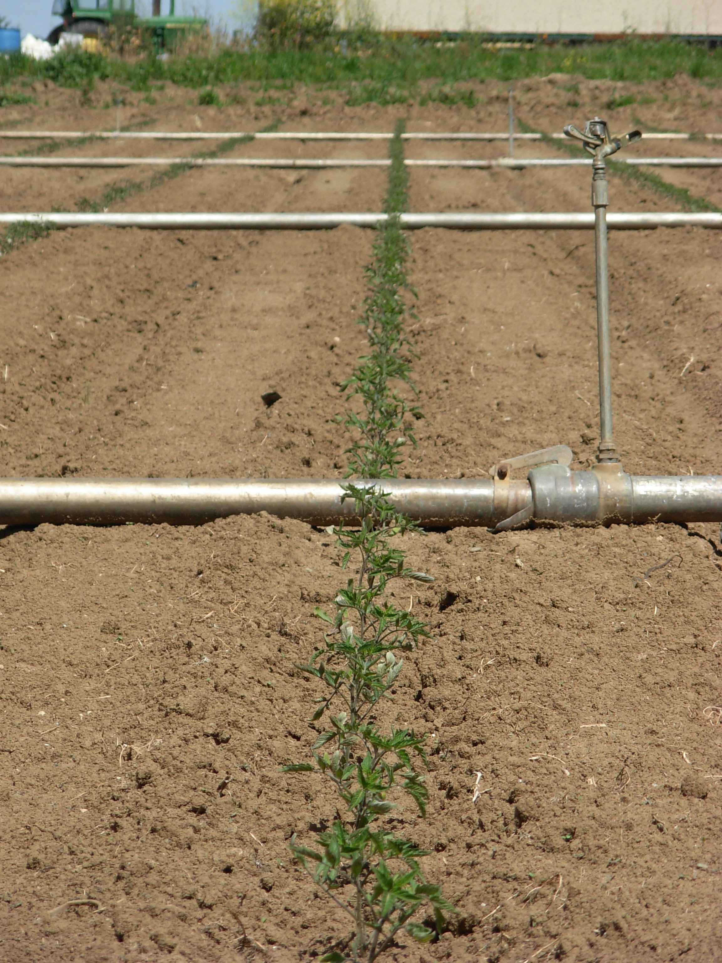 irrigation pipes.JPG