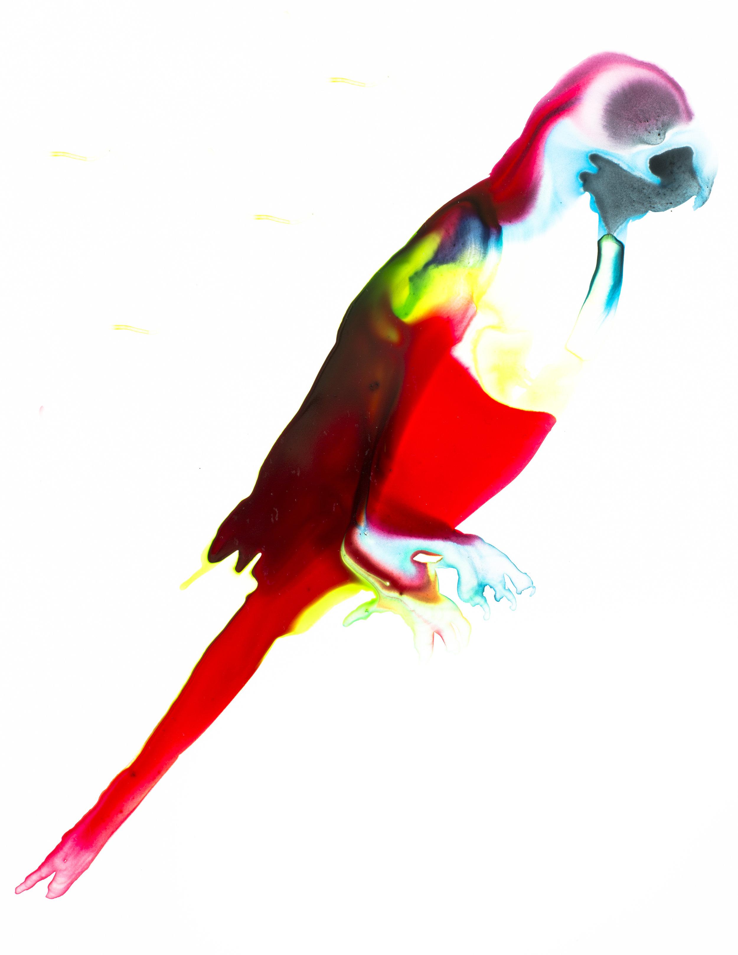 Sinu Parakeet_Alexis Rockman.jpg