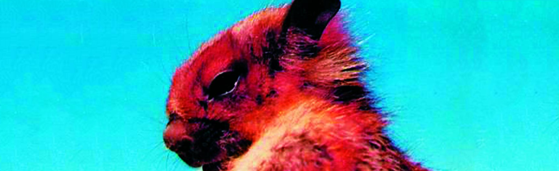 The Namdapha Flying Squirrel was last seen in 1981 in India.