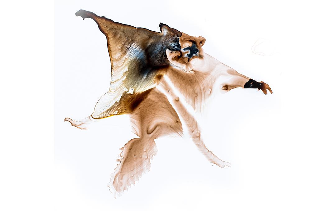 Illustrations by Toni Llobet from:Wilson, D.E., Lacher, T.E., Jr & Mittermeier, R.A.eds.(2017). Handbook of the Mammals of the World . Vol. 7. Rodents II.Lynx Edicions, Barcelona.