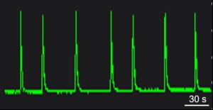 BX0400 Calcium Oscillation.png