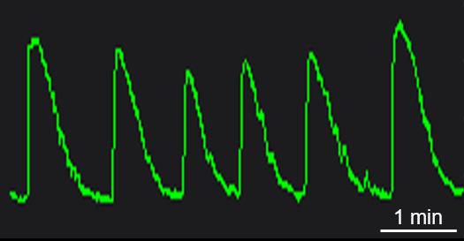BX0700 Calcium Oscillation.png