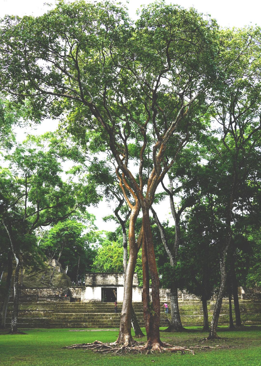 Cahal Pech Ruins in San Ignacio