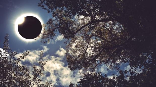 Eclipse in Trees.jpg