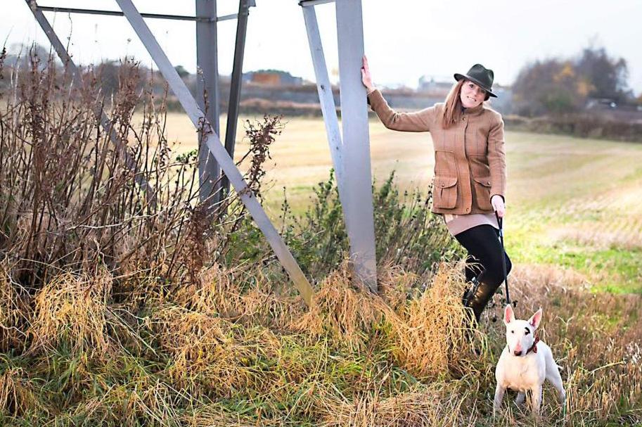 Scotland Dog Training - White Bull Terrier in field