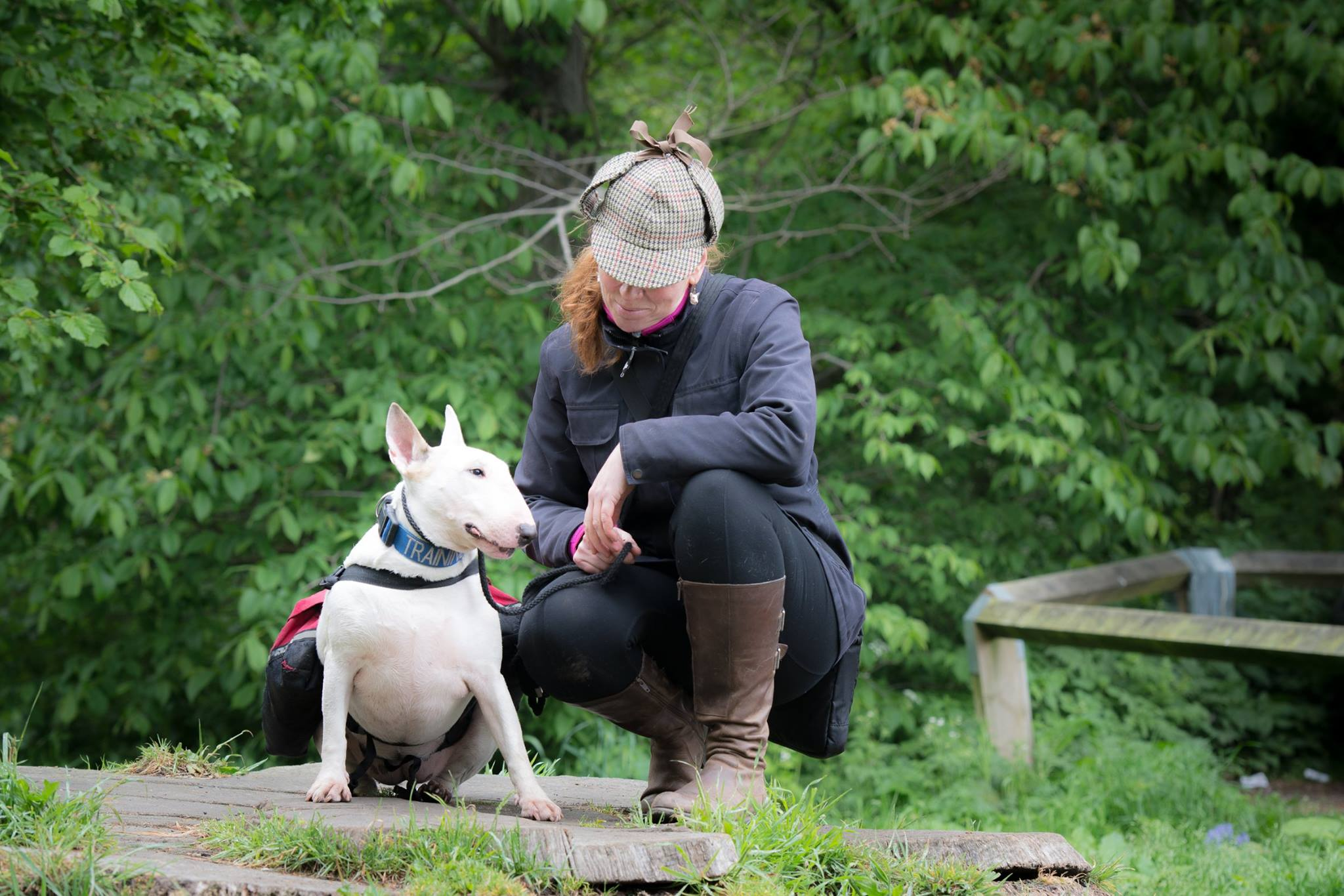 Edinburgh Dog Behaviour Modification