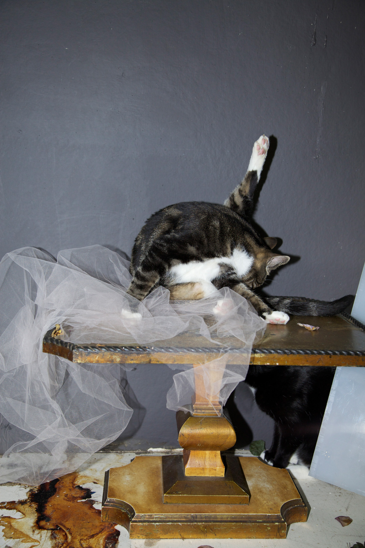 Jacob and the Tulle