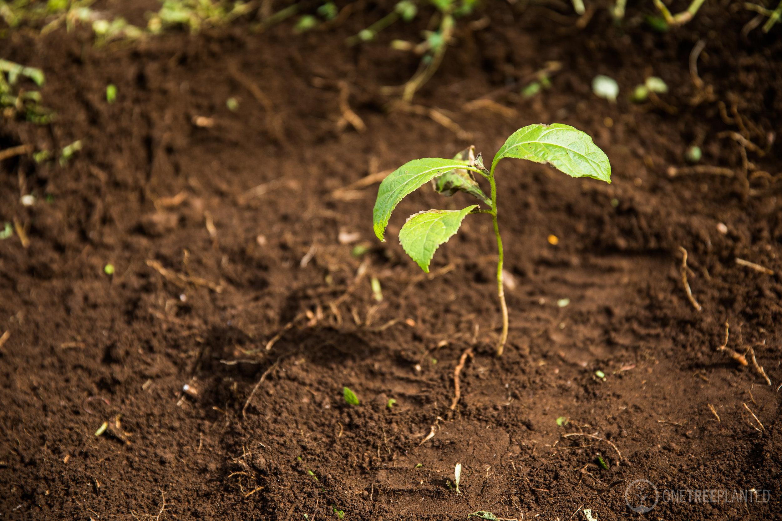 One Tree Planted-28.jpg
