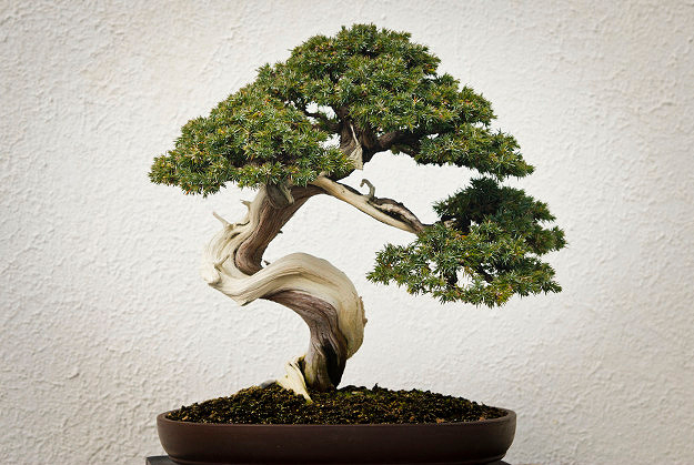 5.Beautiful Bonsai's - The Japanese art form of Bonsai is creating a miniature, but realistic representation of nature in the form of a tree. They serve as the perfect indoor plant on anywhere from your office desk to a shelf in your bathroom.It will certainly give you those peaceful Zen vibes.