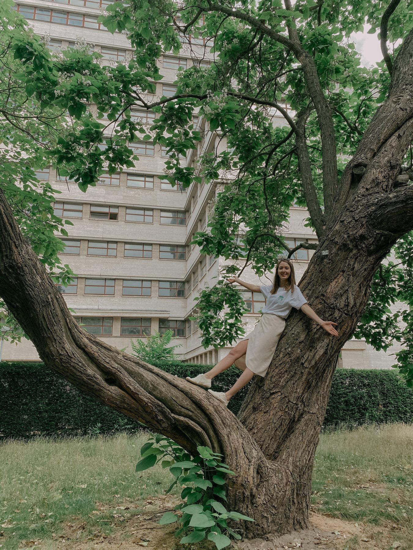 wildling-tree-Biodifications-sustainable-3.jpg