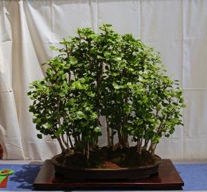 Ellen Keneshea Gingko Forest.jpg