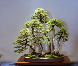 Emil Depiero Juniper Forest.jpg