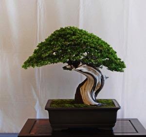 Peter Macasieb Itoigawa.jpg