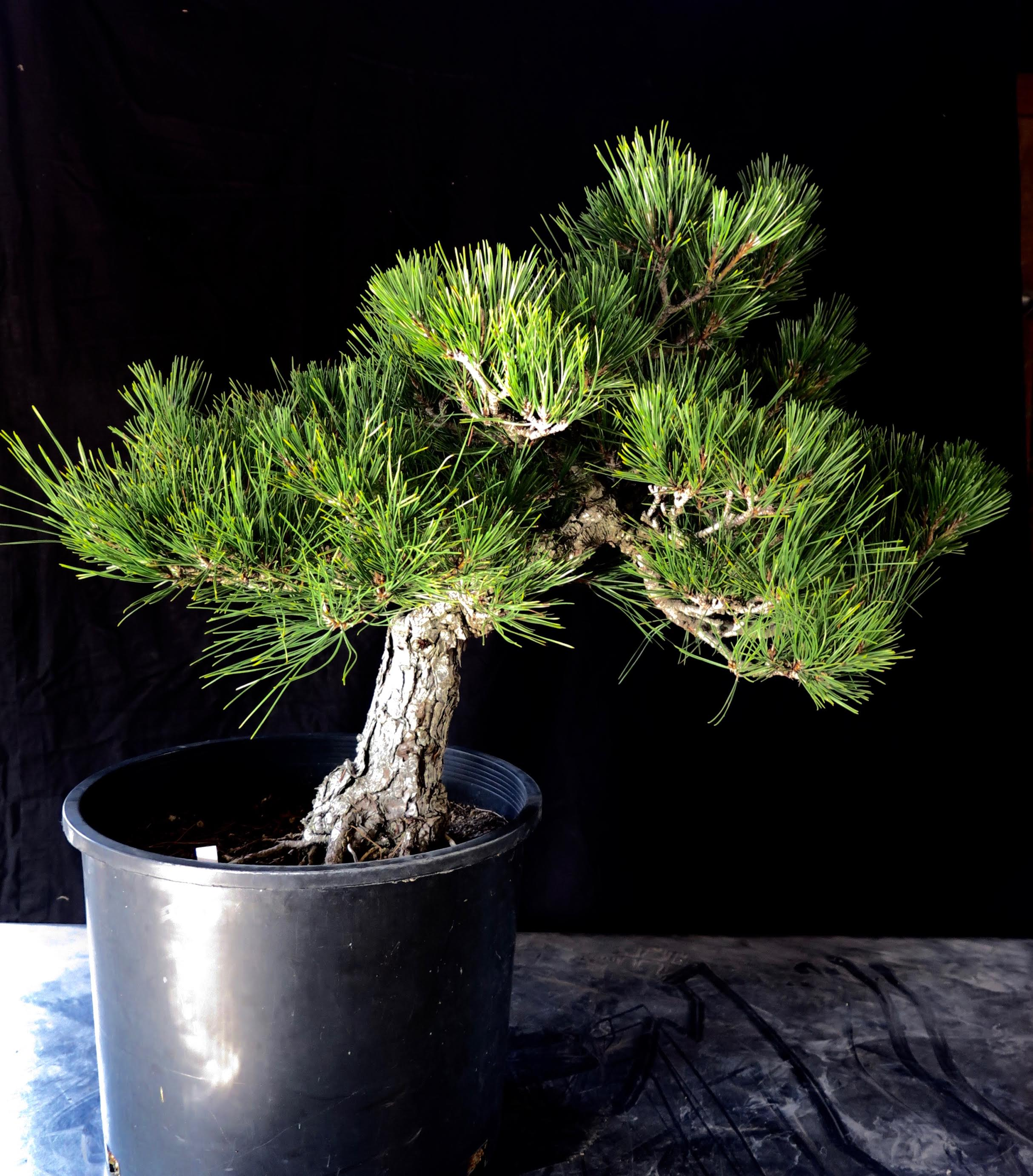 BAT Tree 3.jpg