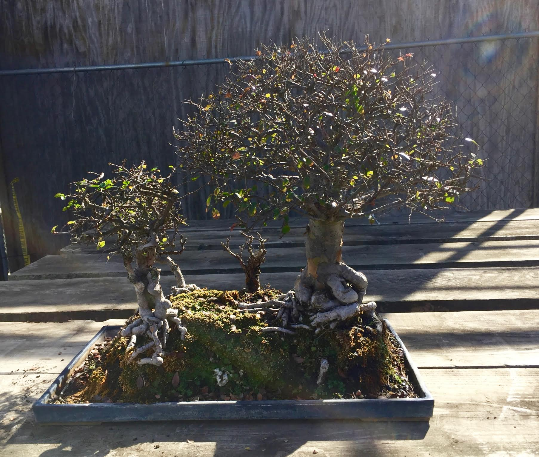 BAT Tree 6.jpg