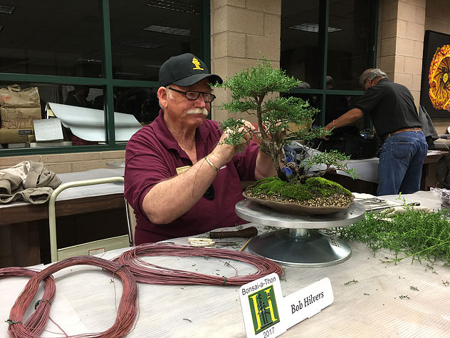 """It is an honor to have the curator of The GSBF Clark Bonsai Collection, Mr. Bob Hilvers, come down to provide this month's demo. Please join us on April 17th where Bob will do a Juniper Tree demonstration which will be RAFFLED OFF!     You can visit the Clark Collection Here:  http://www.clarkbonsaicollection.com/       Bob Hilvers Biography:      Bob Hilvers first took up the art of bonsai almost thirty years ago as a hobby. Bob is a past president of the Hanford Bonsai society, as well as the Golden State Bonsai Federation. He holds an adult teaching credential for the instruction of bonsai at the college level, and was one of the first """"Bonsai Basics"""" instructors certified by the GSBF. He has written many articles for bonsai and art publications, presented lectures and demonstration programs for various bonsai organizations around the state, and has several Penjing (a Chinese form of bonsai) included in the permanent collection at the Huntington Library, Gardens and Art Museum. Now retired after a 36 year career in Public Safety, Bob keeps very busy as the Curator of the GSBF Clark Bonsai Collection at the Shinzen Friendship Garden in Fresno."""
