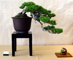 Picture Courtesy of Sansui-Kai