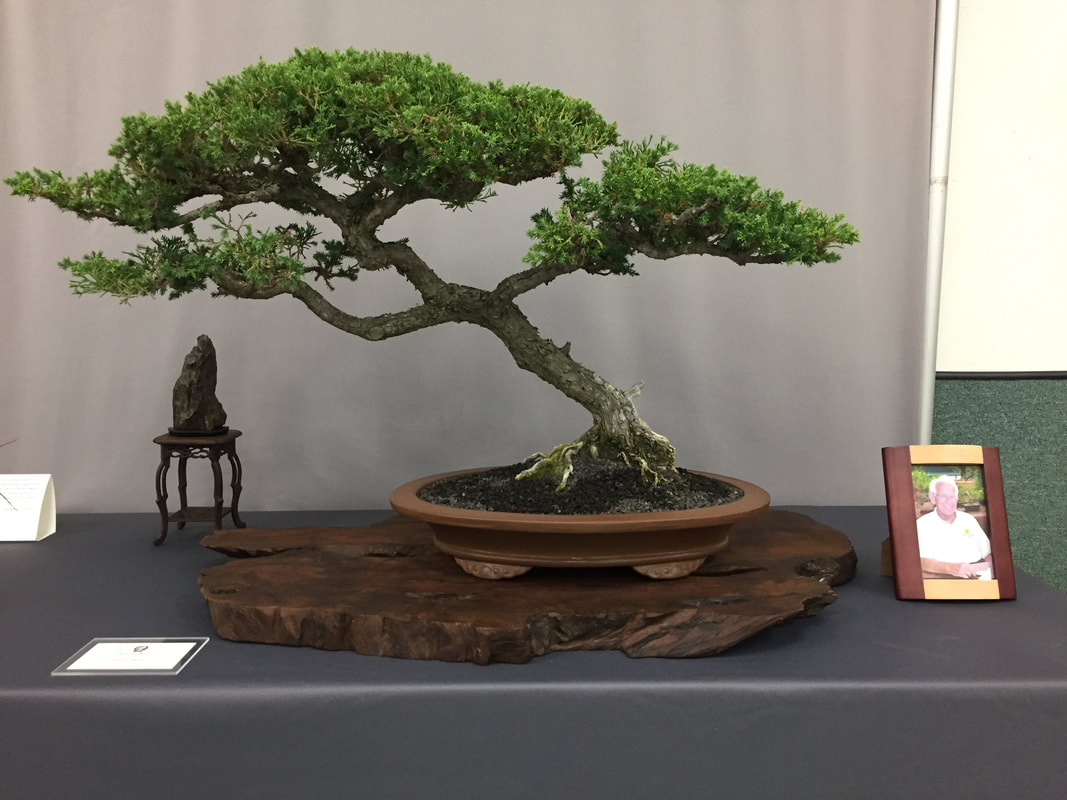 San Diego Bonsai Club 53rd Annual Bonsai Show Descanso Bonsai Society
