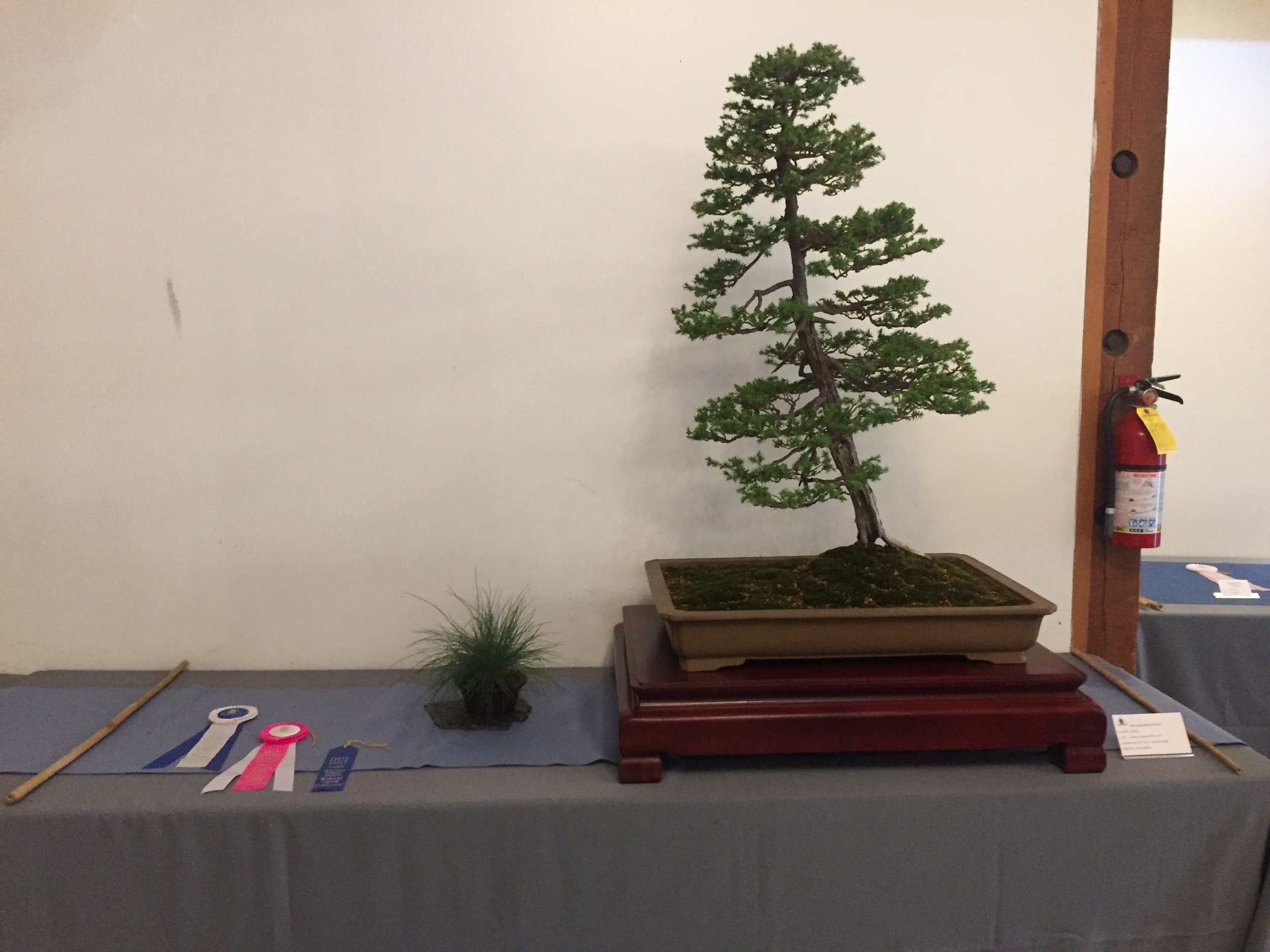 Latest News Descanso Bonsai Society
