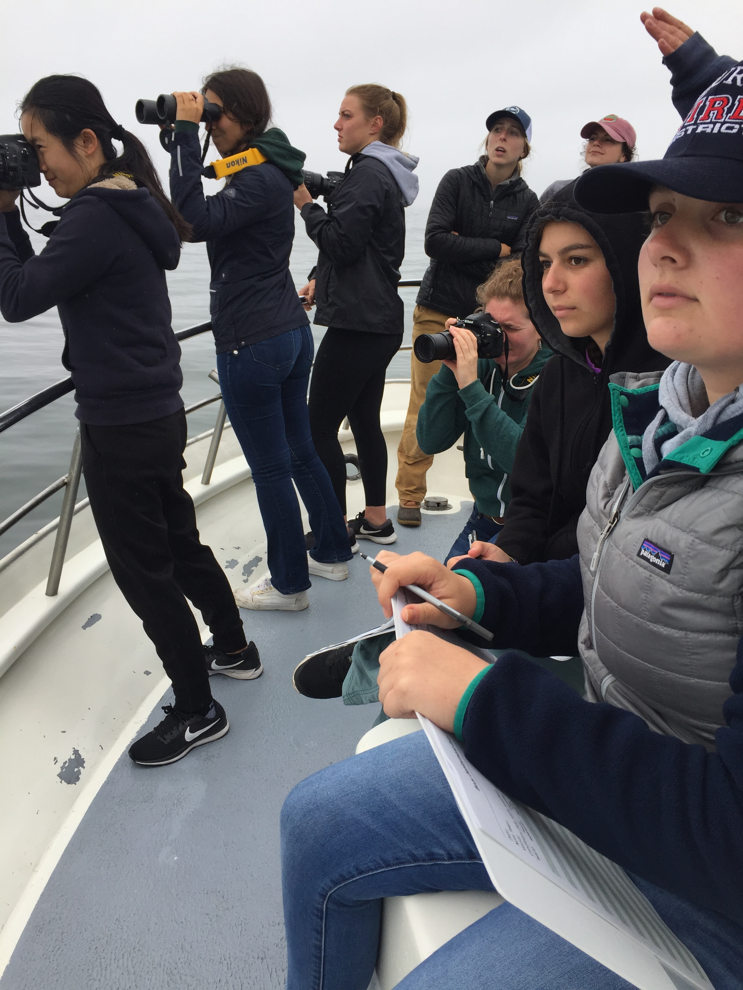 MMST students observe the behavior of humpback whales in Monterey Bay