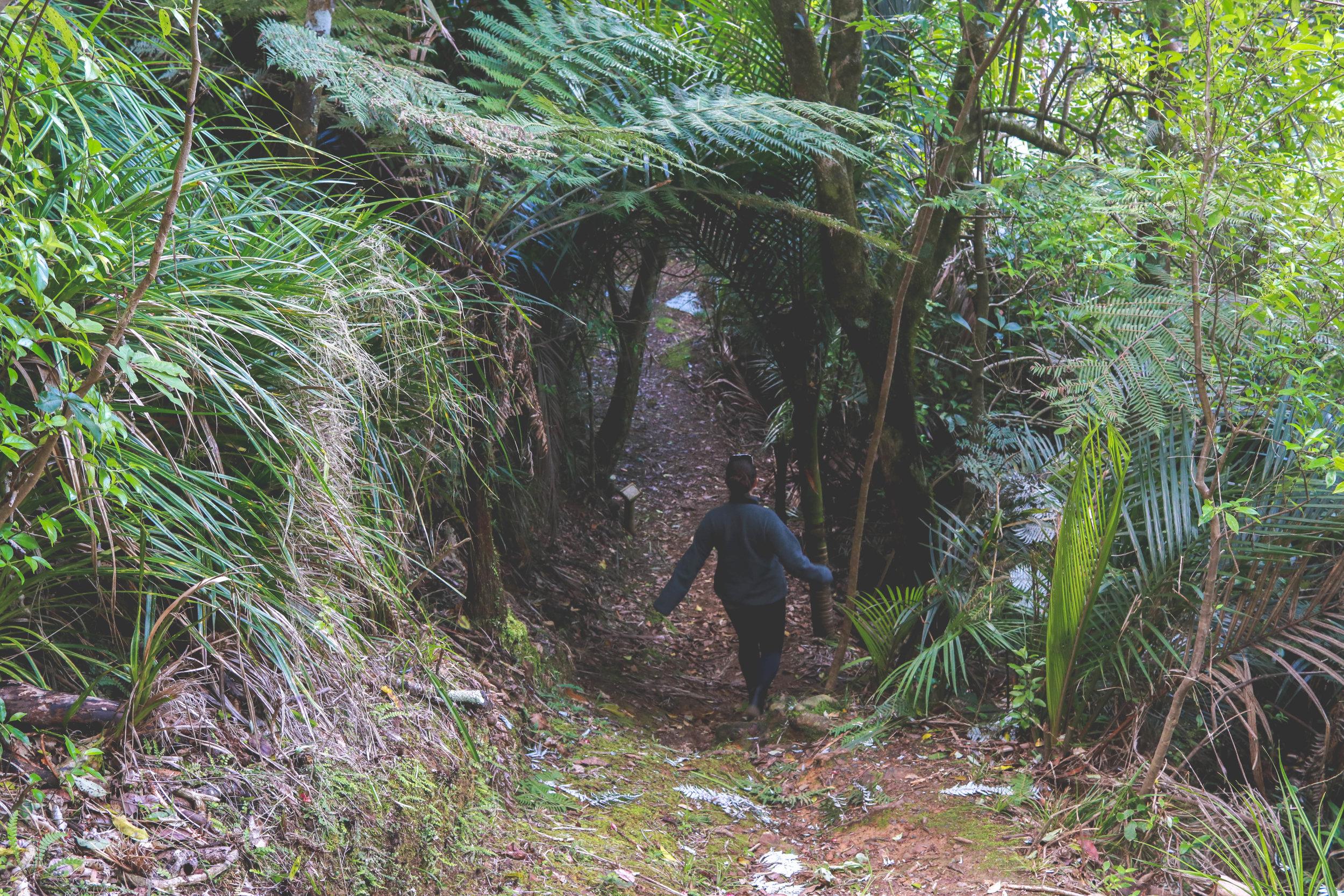 Kauri Grove Trail, Russell Whakapara Road