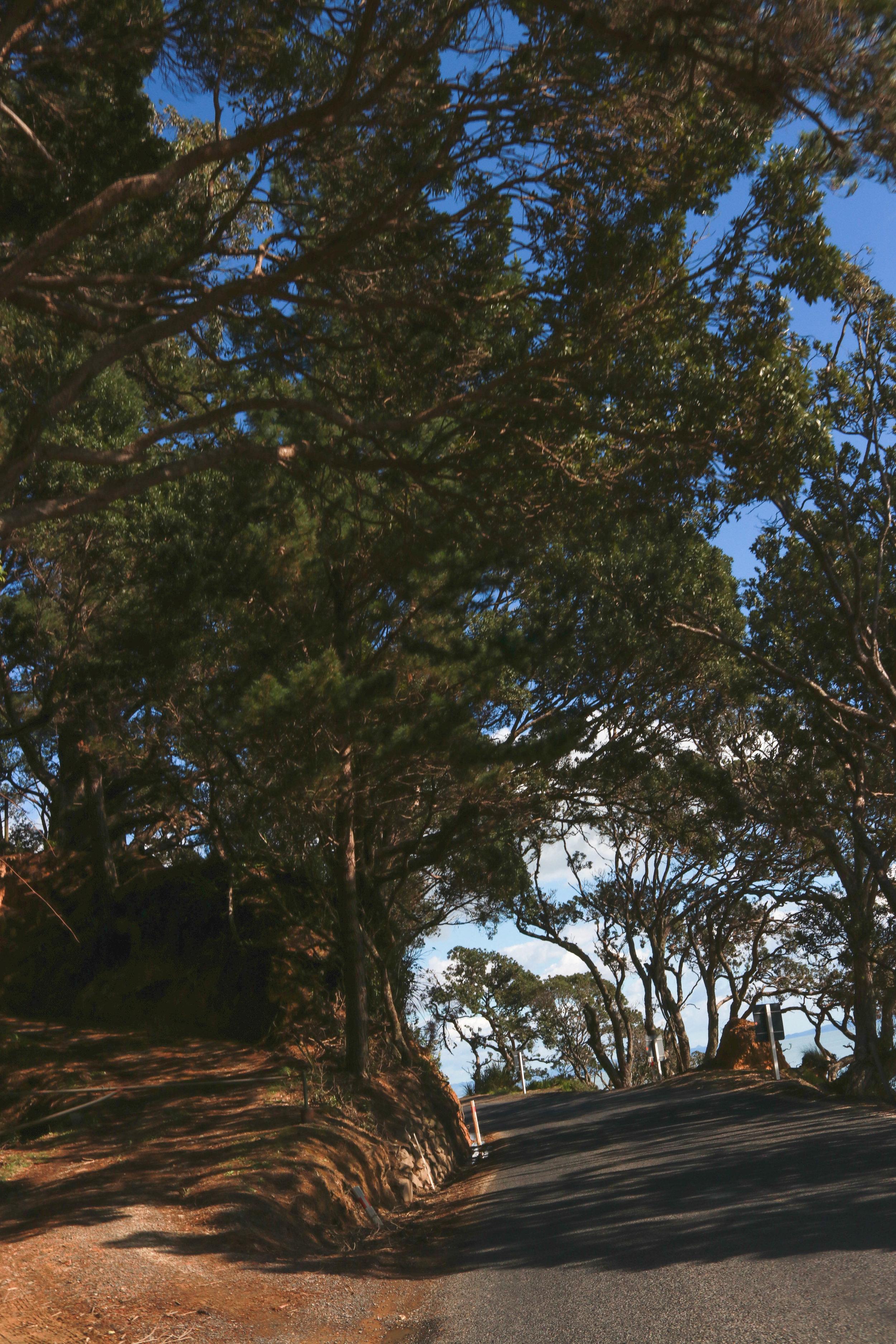 Pohutukawa trees along the Pacific Coast Highway