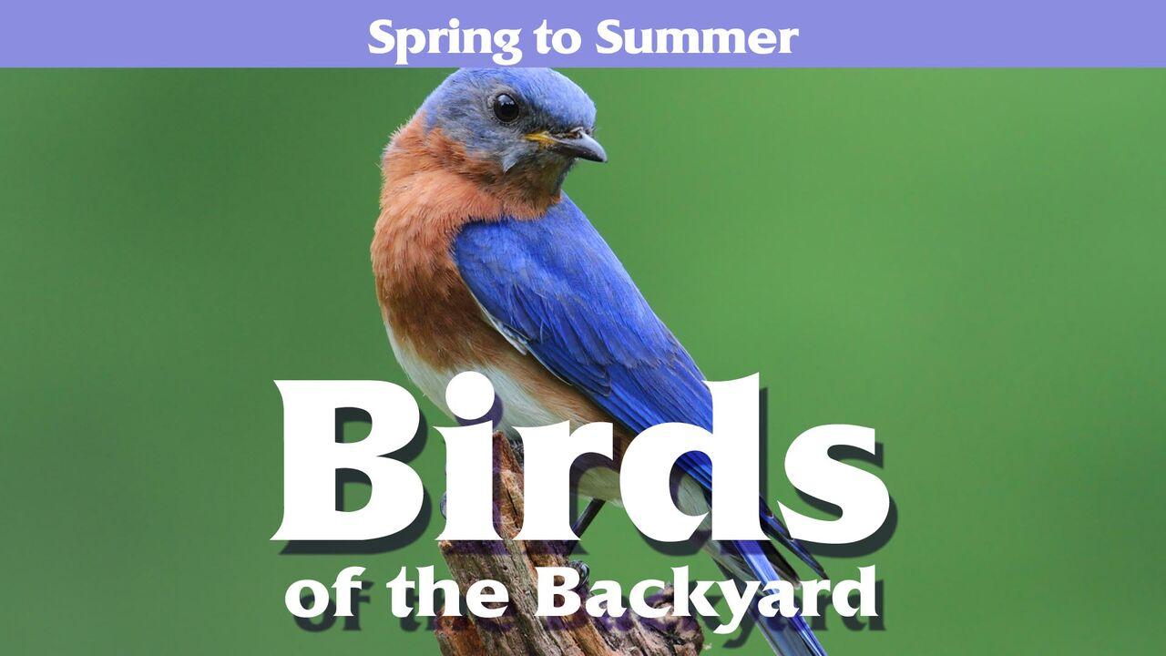 Birds of the Backyard -