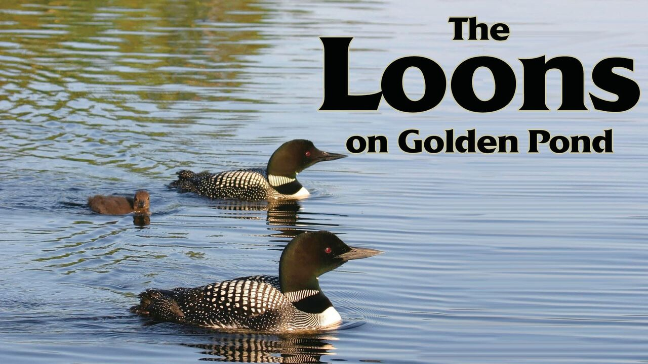 The Loons On Golden Pond -