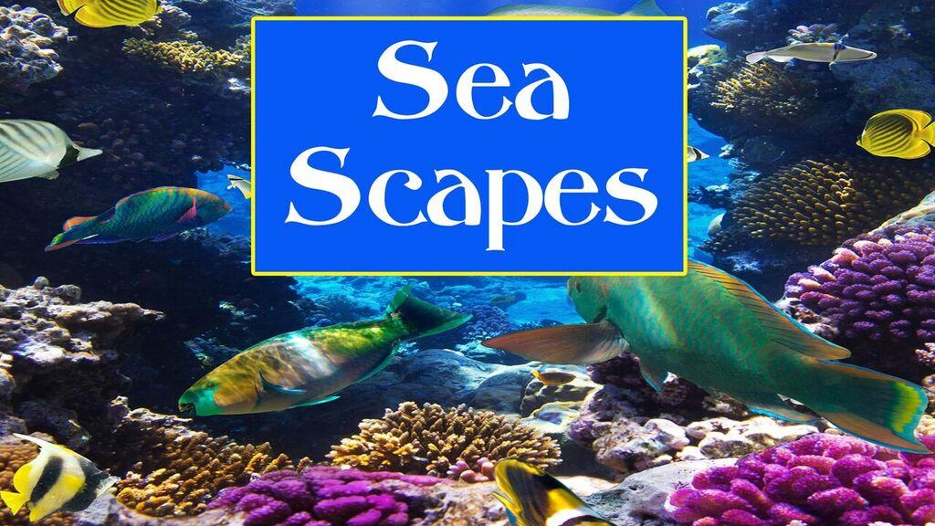 Sea Scapes -