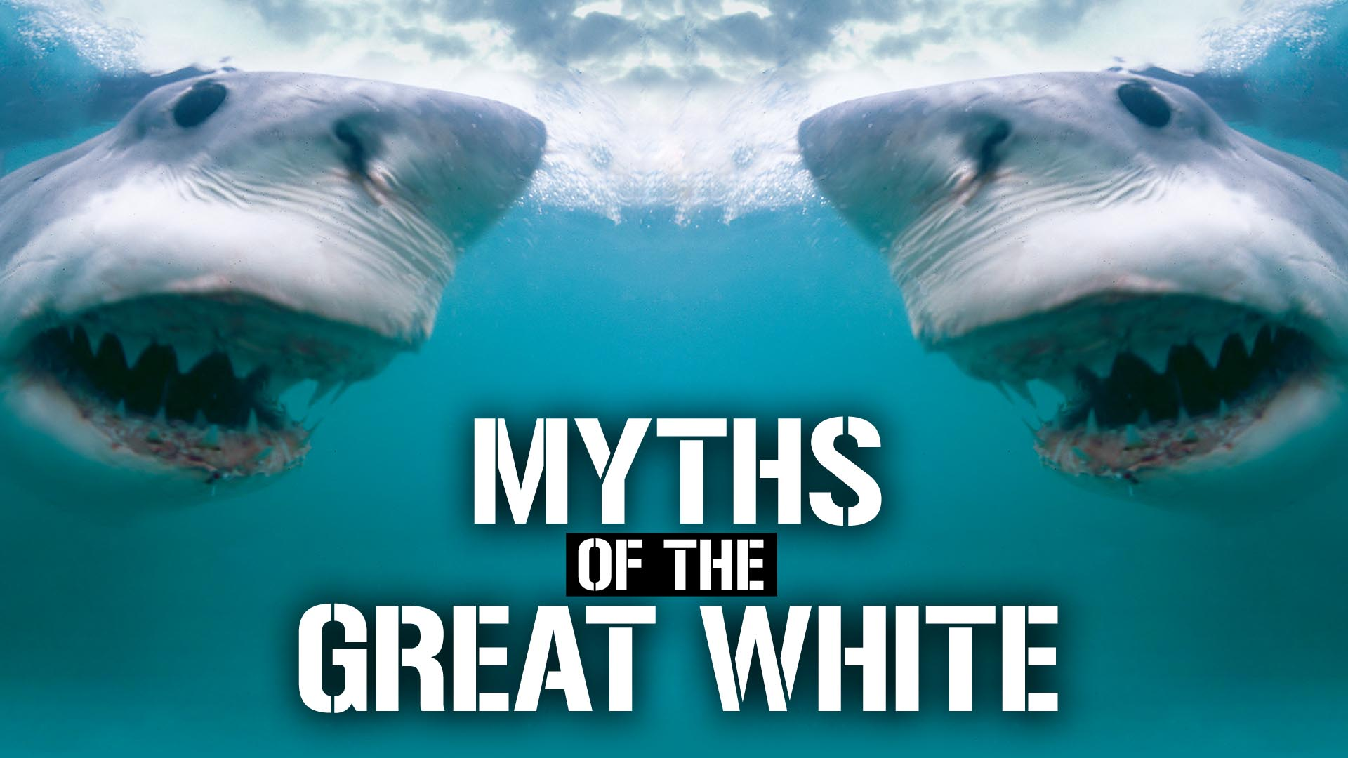 Myths of the Great White -