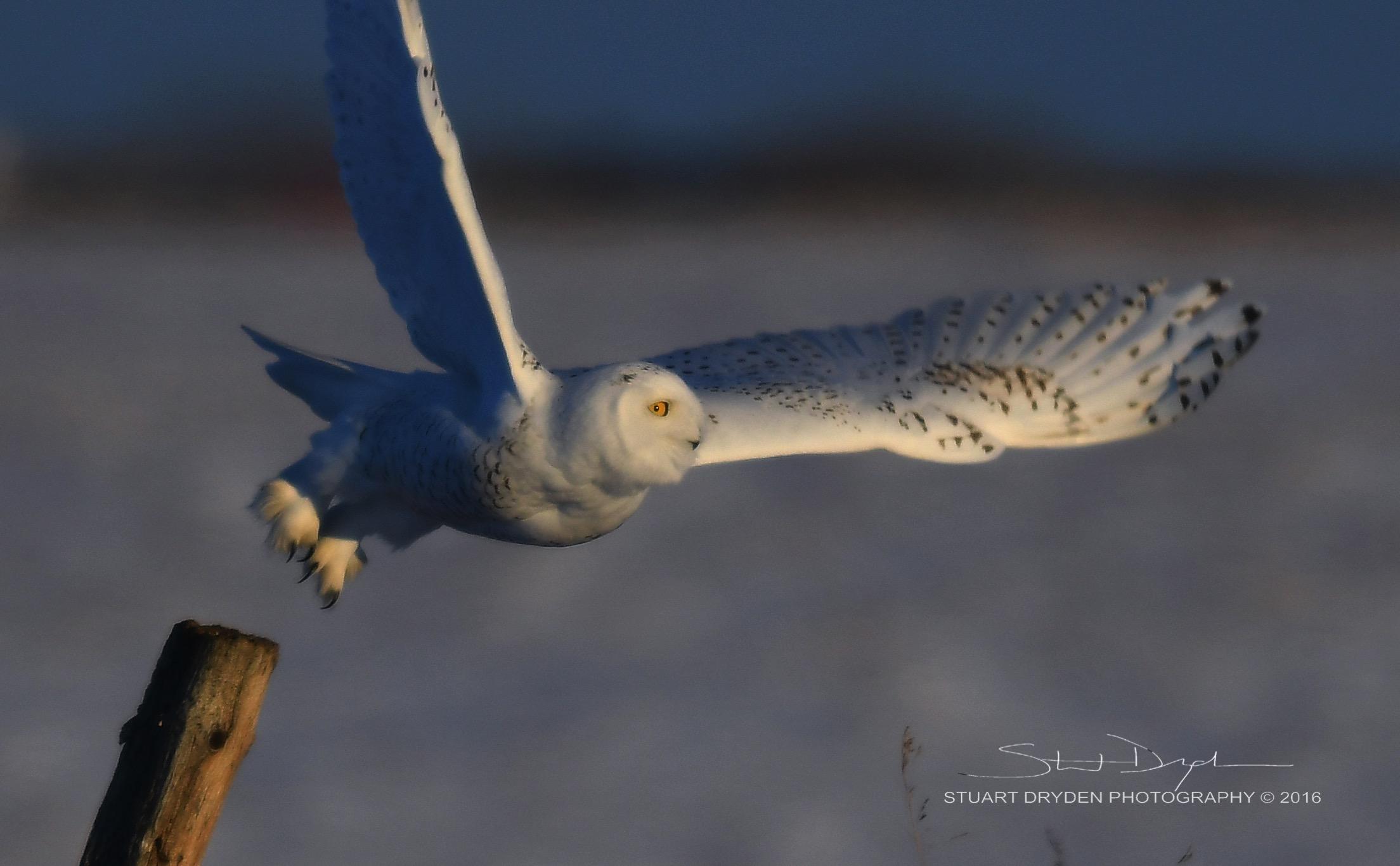 AMAZING-OWLS DEC12-20160161.jpg
