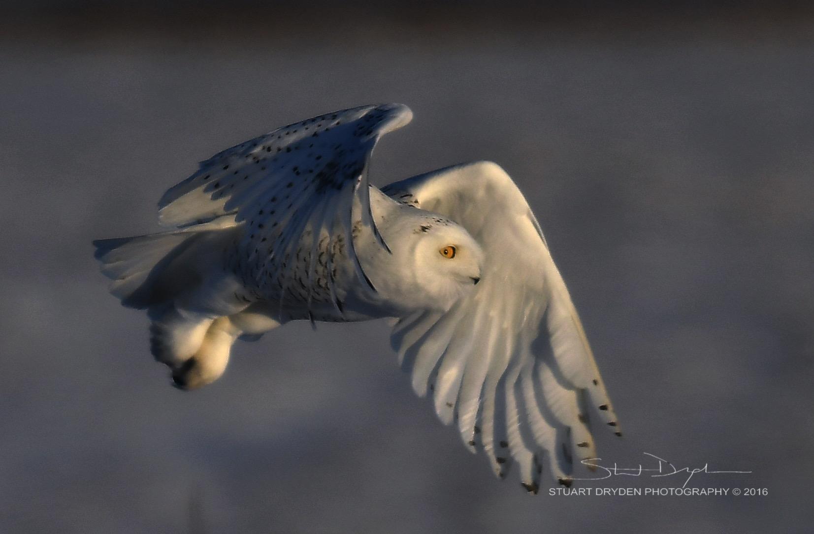 AMAZING-OWLS DEC12-20160165.jpg