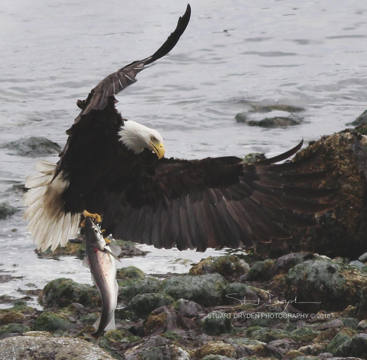 eagle-fish-21-05-16_052-tight2.jpg