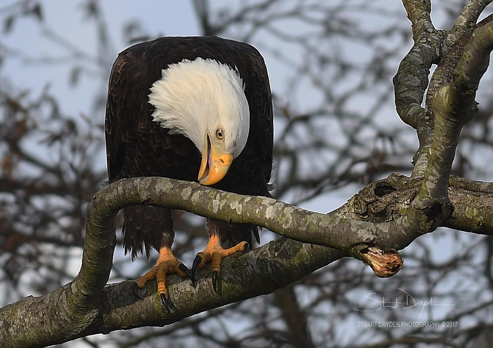 eagles-feb20-170061.jpg