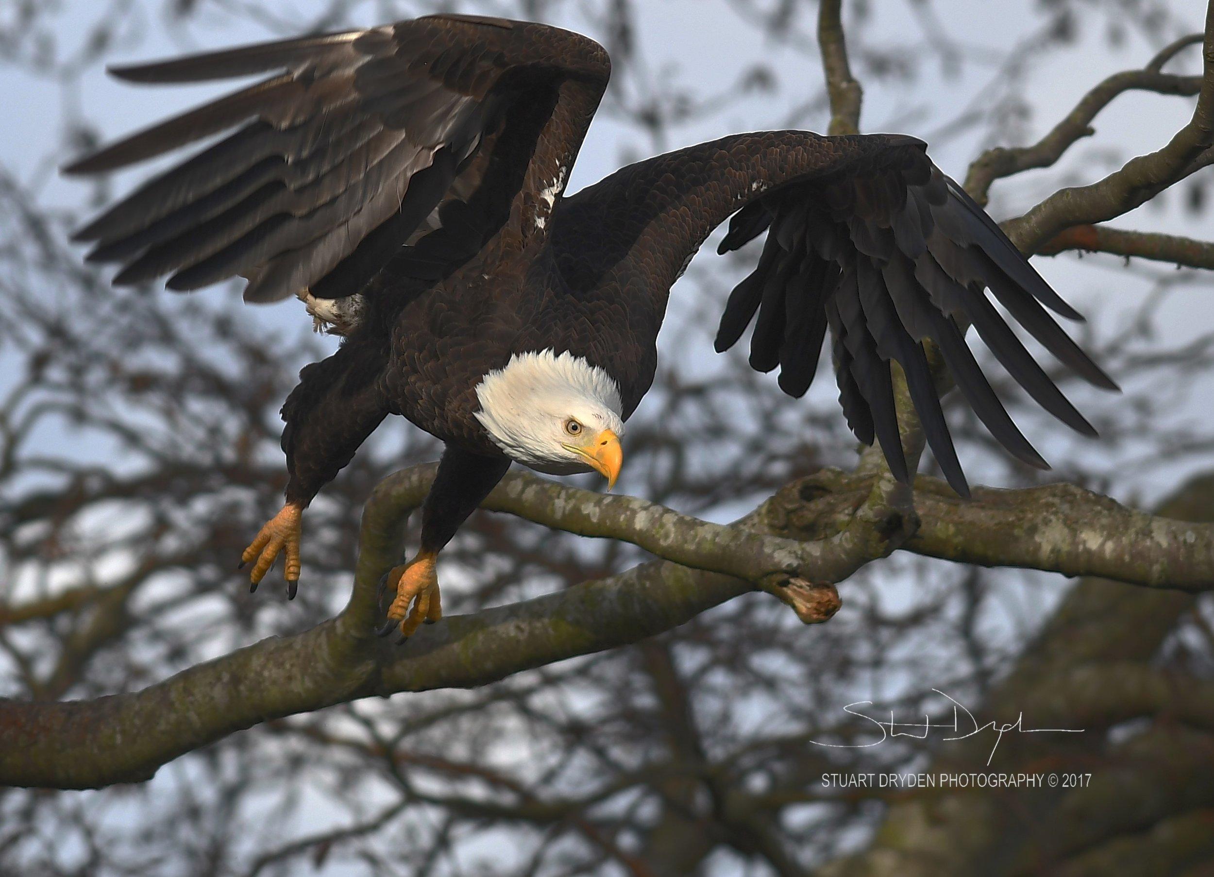 eagles-feb20-170064.jpg