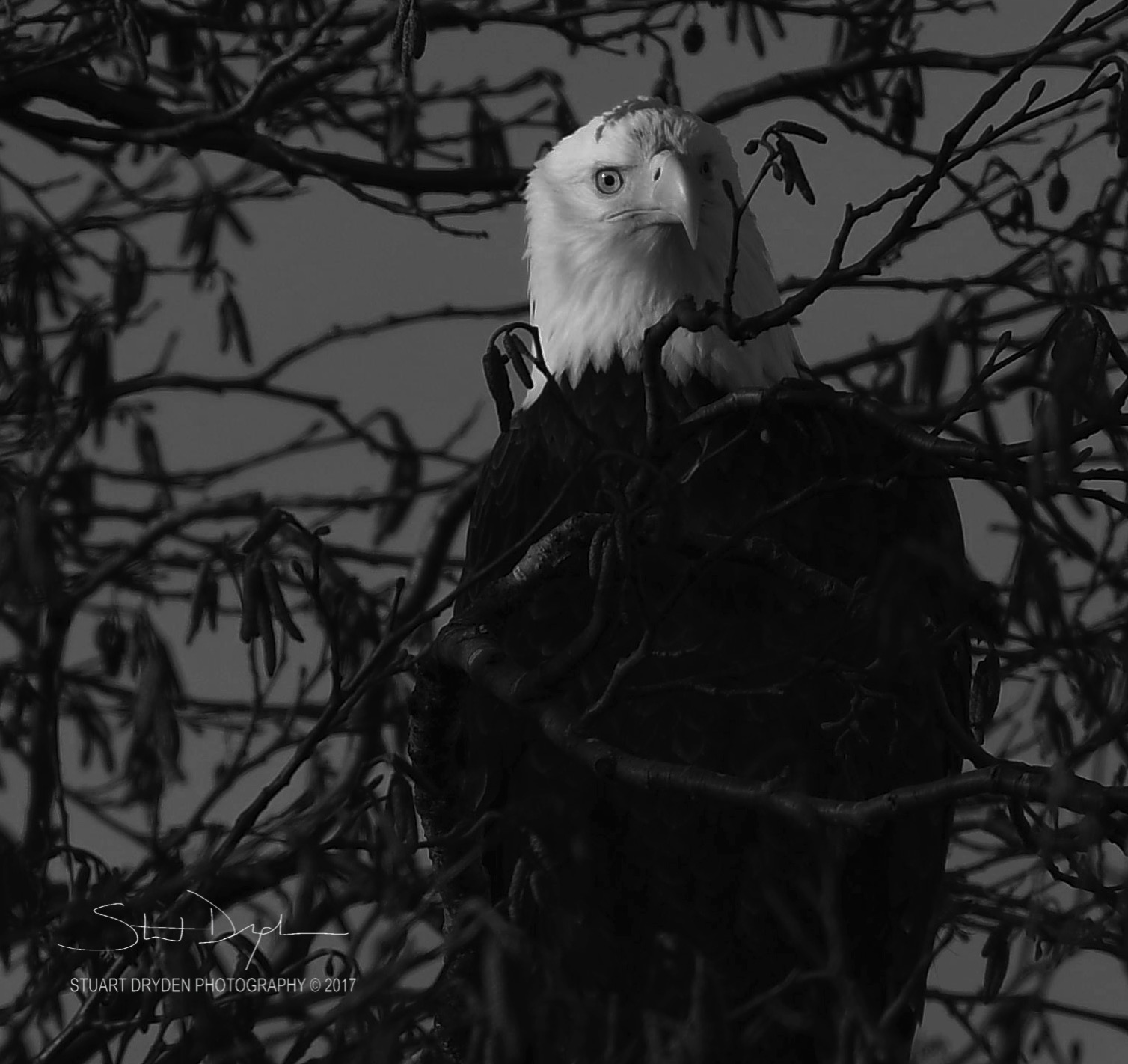 eagles-feb20-170073BW.jpg
