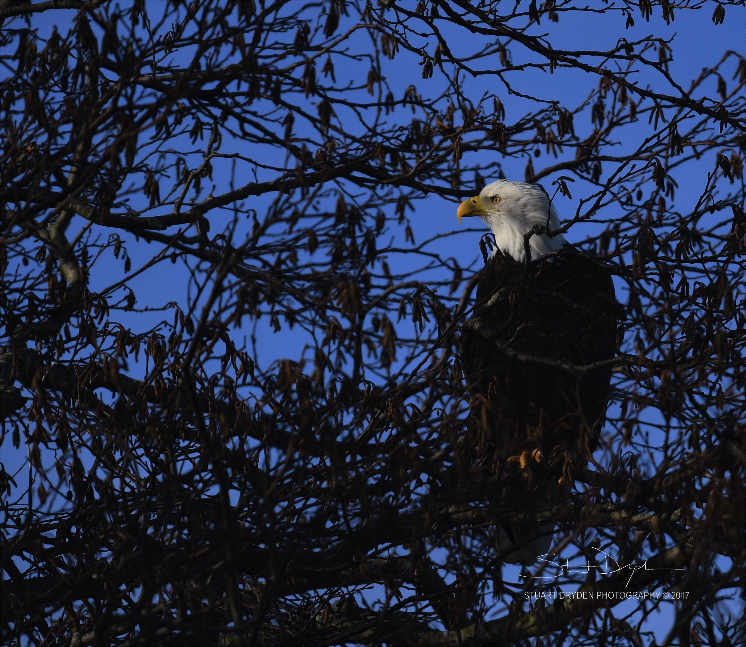 eagles-feb20-170069.jpg