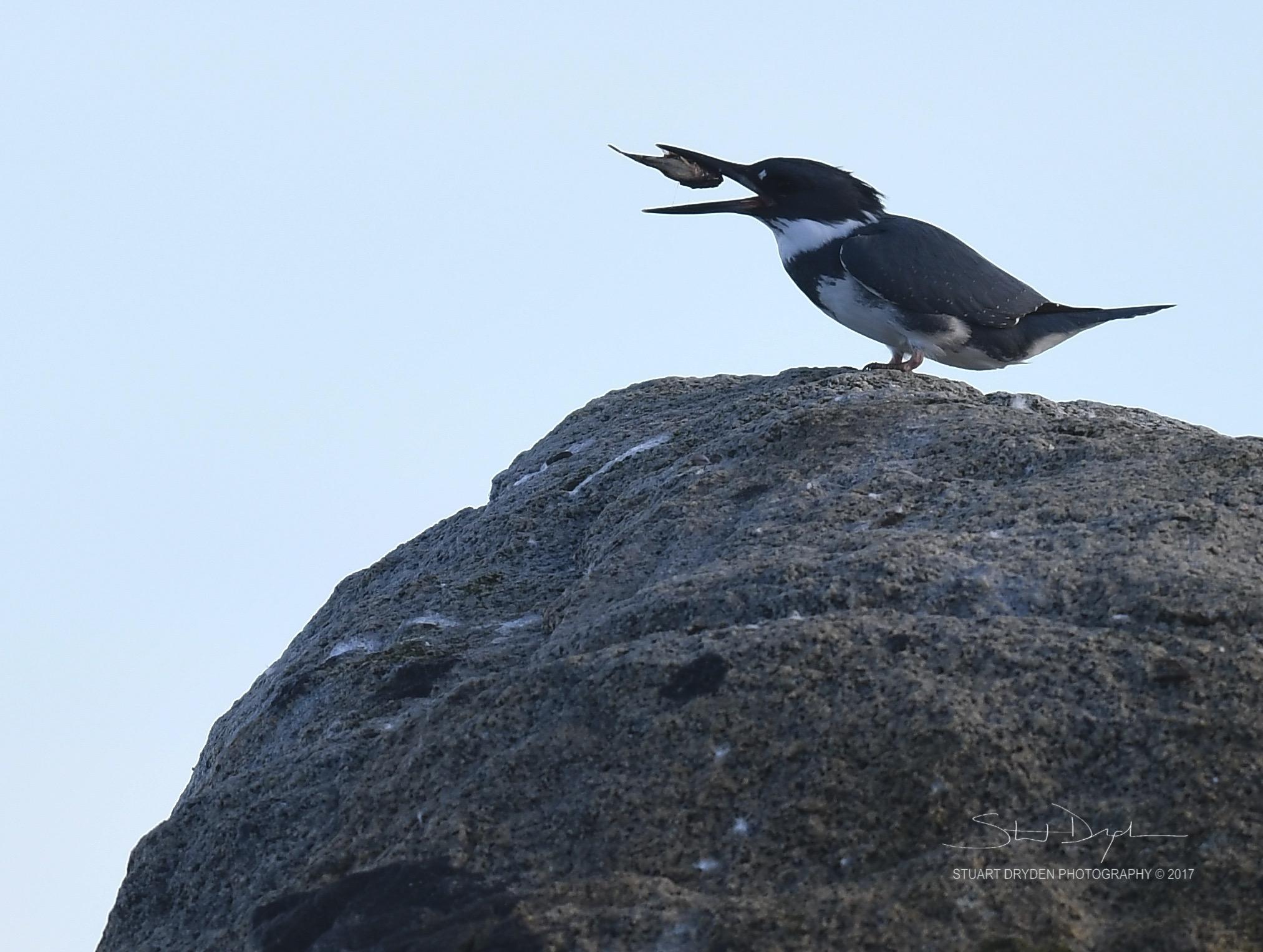 eagles-heron-feb17-170167-1.jpg