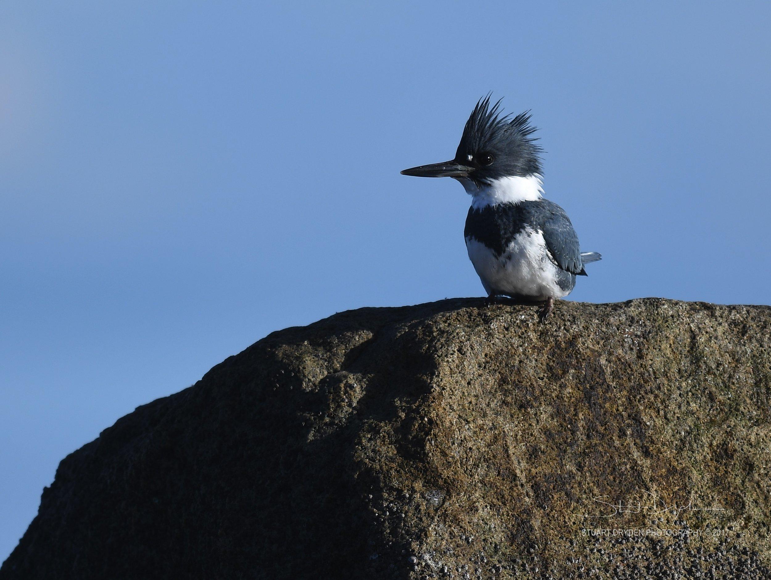 eagles-heron-feb17-170213.jpg