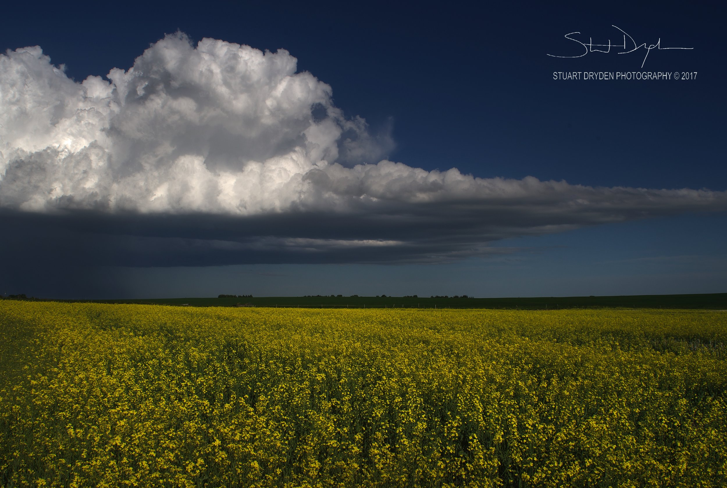 Canola Cloud