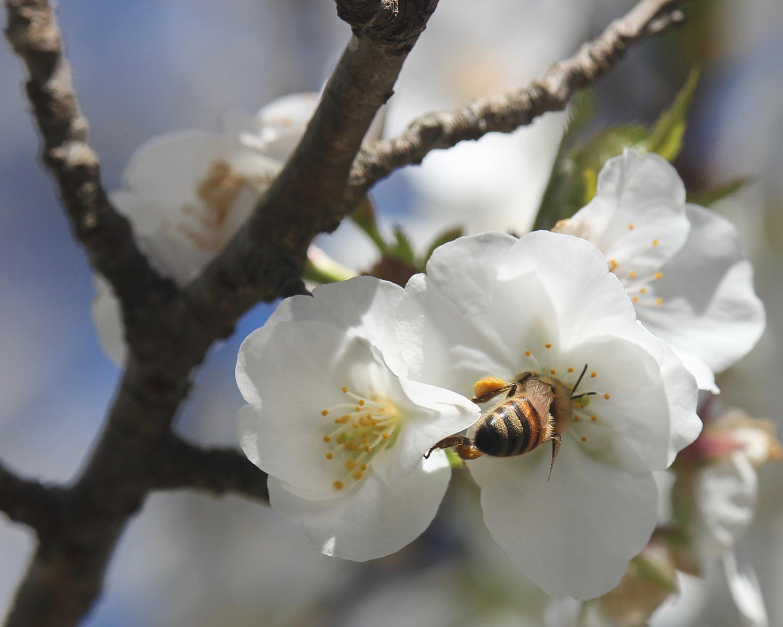 honeybeetree.jpg