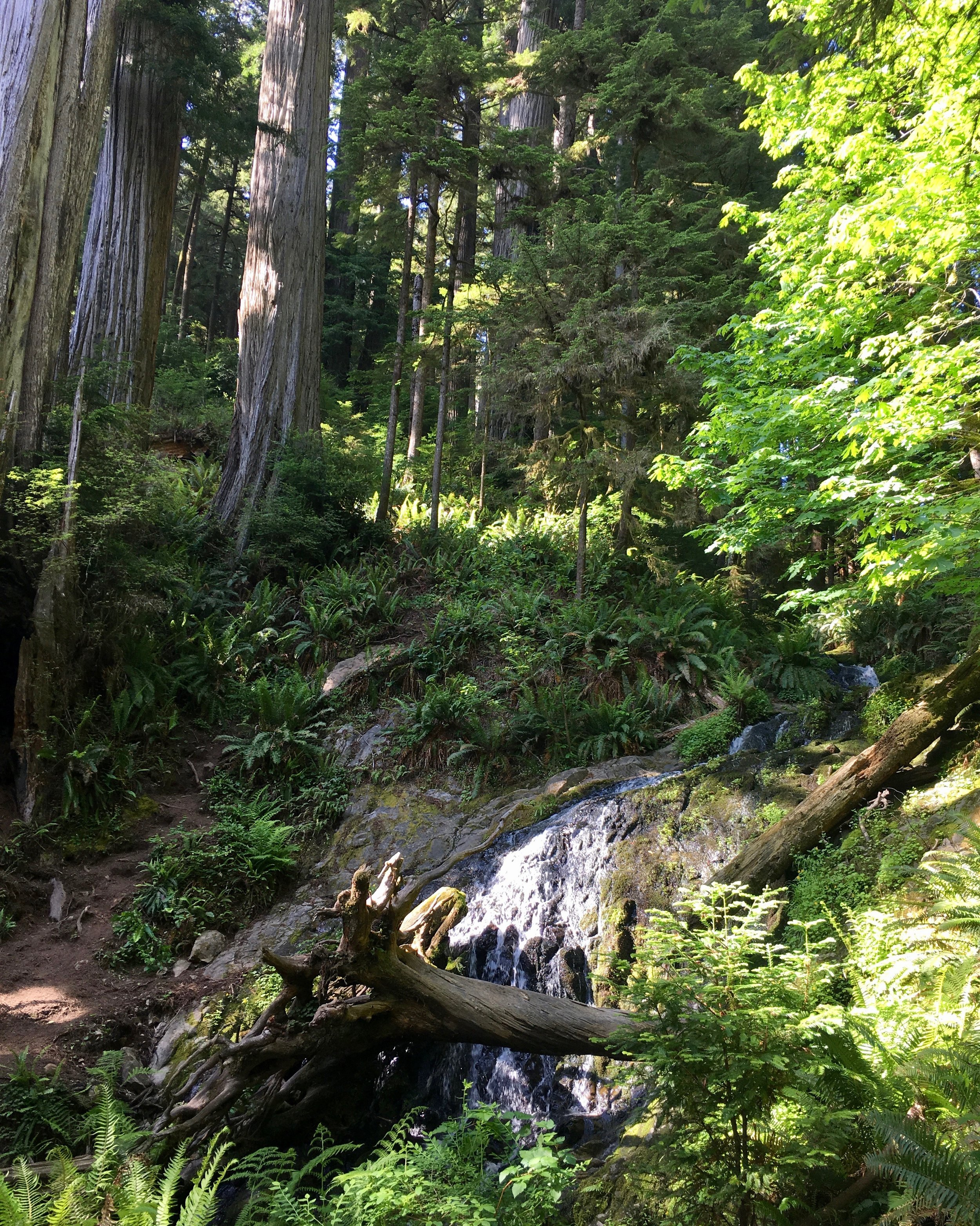 redwoodwaterfall