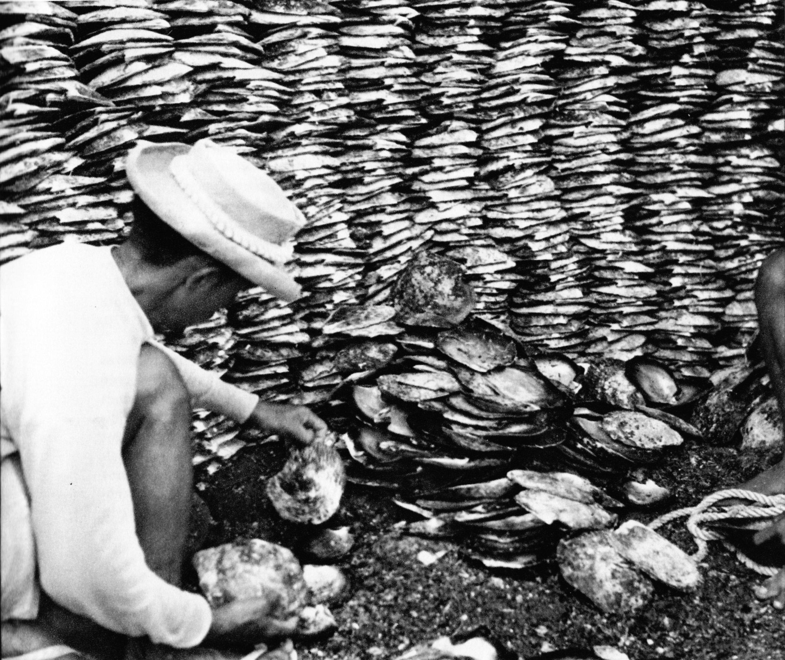 Reed_Tri et stockage des huitre s nacrières (CL. L. Molet).jpeg