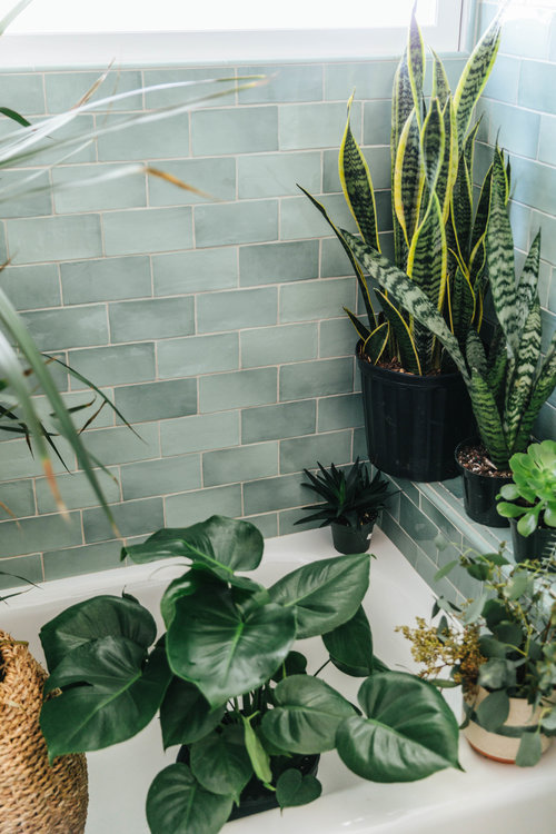 plants — House of Nomad | Blog — House of Nomad