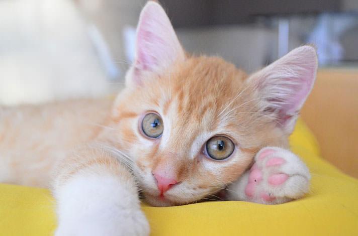 Sweet & Playful    Kittens